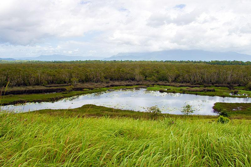 eubenangee wetlands wooroonooran national park