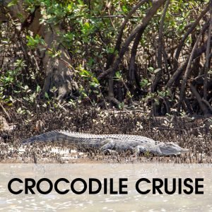 crocodile cruise on wooroonooran safaris