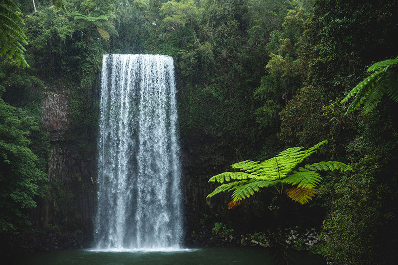 cairns charter tours to atherton tablelands millaa millaa falls