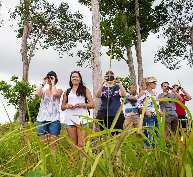 eubenangee wetlands tour wooroonooran safaris