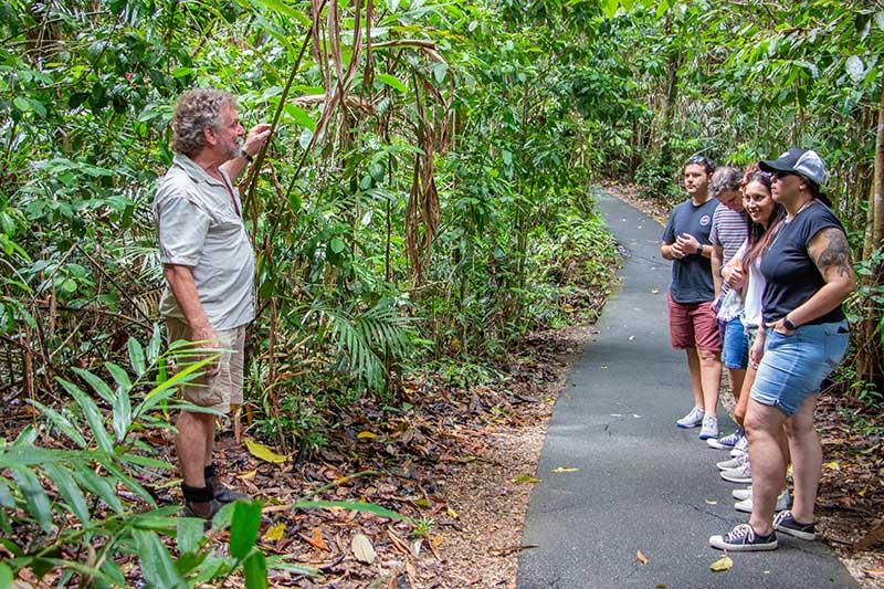 rainforest nature tour cairns wooroonooran safaris